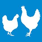https://tracking.vdlagrotech.nl/image/7220/0/2338/ce4fa7ba9489e84d1c99de29fff7f2de/Breeders.png
